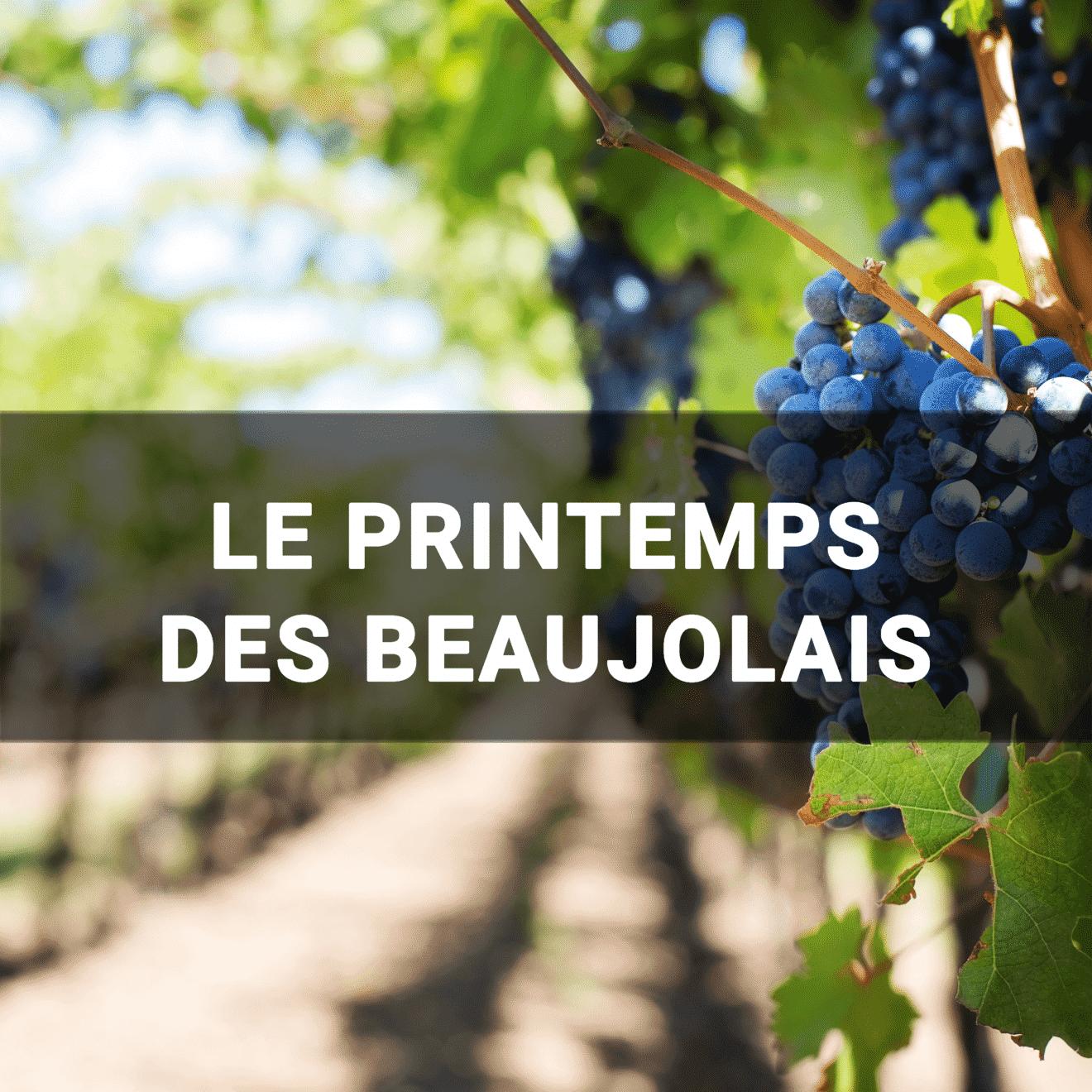 Raisin dans un vignoble - Le printemps des beaujolais
